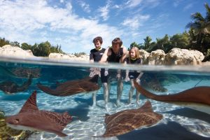discovery-cove-day-resort-package-1753