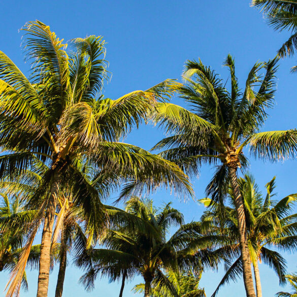 Everyone loves the beaches with our stunning palm tree residents