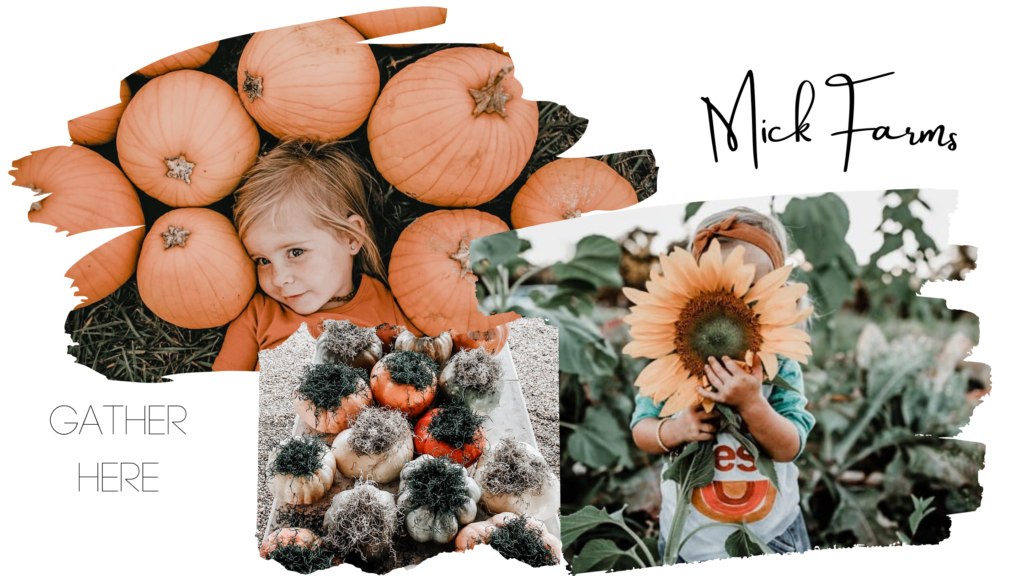 Mick Farms in Central Florida is perfect for Fall photos