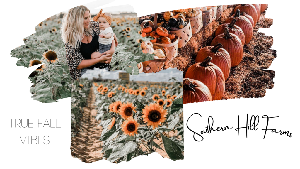 Southern Hills Farm is one of the best perfect Orlando Fall Instagram Locations