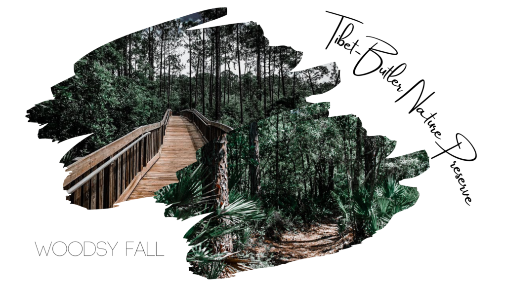 Woodsy Fall Vibes for this Fall Instagram Location