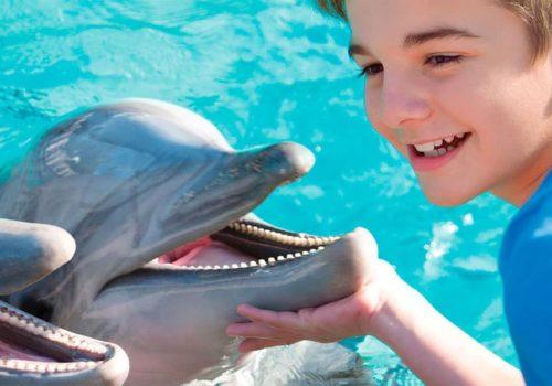 Seaworld-dolphin-encounter-900x600px